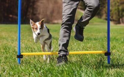 Elke leidinggevende verplicht naar hondentraining